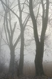 Trees in misty forest Stock Image