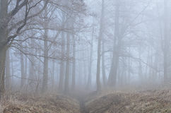 Trees in misty forest Royalty Free Stock Image
