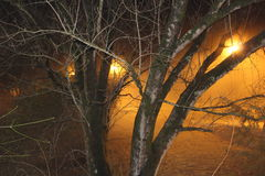 Trees in the misty glow of park lights. Orange lights mist fog pathway Royalty Free Stock Photos