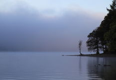 Trees by misty lake stock photos