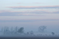 Trees in a misty landscape. The sun is disappearing and the mist is growing Royalty Free Stock Image