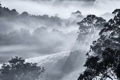 Trees on a Misty Morning Stock Images