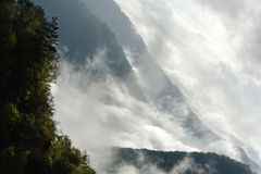 Trees on Misty Mountains Royalty Free Stock Image