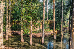 Trees moat angkor thom cambodia Stock Photos