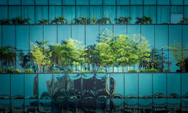 Trees on modern building Stock Photos