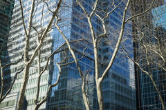 Trees and modern buildings, New York City Stock Photo