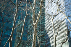 Trees and modern buildings, New York City Royalty Free Stock Photos