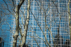 Trees and modern buildings, New York City Stock Images