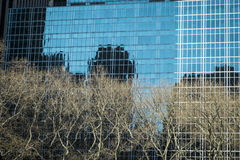 Trees and modern buildings, New York City Stock Photos