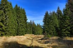 Trees, Modrava, Sumava, Boemerwald, Czech Republic. A picture of the Trees Modrava, Sumava, Czech Republic Stock Photo