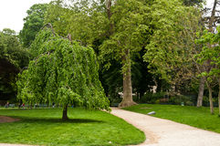 Trees in Monceau Park Royalty Free Stock Images