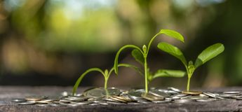 Trees with money, saving money and growing hands. Trees with money, saving  money and growing hands stock images