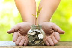 Trees with money, saving money and growing hands.Growing Business Growth and Financial Cultivation of Plants from Coins in Glass royalty free stock photography