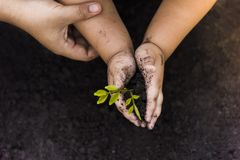 Green Tree Planting World Green .Trees with money, saving money and growing hands. stock image