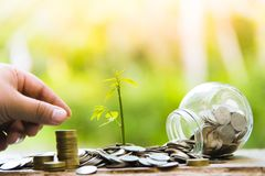 Trees with money, saving money and growing hands.Growing Business Growth and Financial Cultivation of Plants from Coins in Glass B stock photography