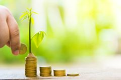Trees with money, saving money and growing hands.Growing Business Growth and Financial Cultivation of Plants from Coins in Glass B royalty free stock photos