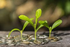 Trees with money, saving money and growing hands. Trees with money, saving money and  growing hands royalty free stock image