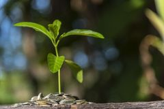 Trees with money,  saving money and growing hands. Trees with money, saving money and growing hands stock photography
