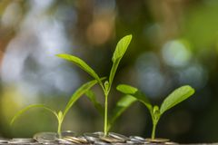 Trees with money, saving money and growing hands. Trees with money, saving  money and growing hands royalty free stock photo
