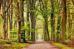 Trees Monument. Trees in fall scene, Bantam Park, Bussum, Netherlands Stock Photos