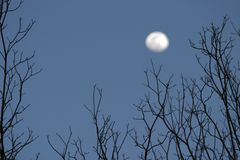 Trees and Moon Royalty Free Stock Images