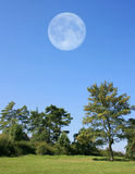 Trees with Moon. This image shows a scenery with full moon stock image