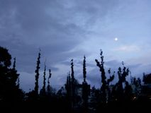 At Dusk. Trees and Moon in the early evening stock images