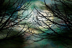 Trees with a moon. Royalty Free Stock Images