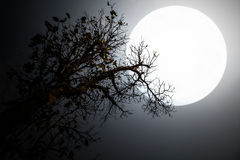 Trees and moon night shadow. Trees and moon scary night shadow Stock Images