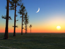Trees Moon and Sun. A line of tall trees lined up into the horizon under the moon and sun Royalty Free Stock Photo