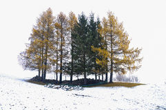 Trees in morning fog. Trees in the morning fog after the first snow of October in the Alps near the Lake Como in Italy Royalty Free Stock Photography