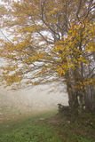 Trees in the morning fog. Image of trees in the morning fog Royalty Free Stock Photo