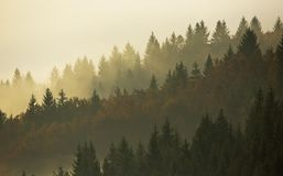 Trees in morning fog. On mountain in autumn Stock Images