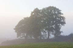 Trees in the morning fog near Oviedo, Asturias Royalty Free Stock Photography