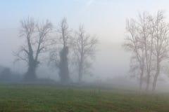 Trees in the morning fog near Oviedo, Asturias. Spain Royalty Free Stock Photos