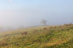 Trees in the morning fog near Oviedo, Asturias. Spain Stock Photos