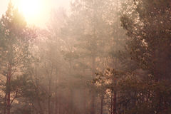 Trees in a morning fog Stock Photography