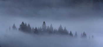 Trees in the morning fog Royalty Free Stock Photography