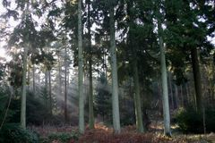 Trees with morning light. In the spring Stock Image