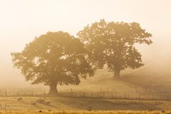 Trees in the Morning Mist, Shropshire, England stock photography