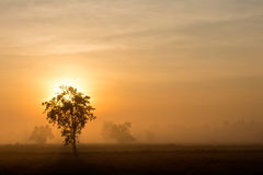 Trees with morning mist. royalty free stock photography