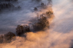 Trees in the morning mist Royalty Free Stock Photography
