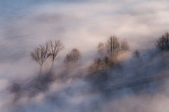 Trees in the morning mist Stock Photography
