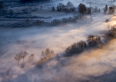 Trees in the morning mist Royalty Free Stock Image