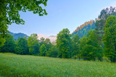 Trees in the morning. Pieniny mountains. Royalty Free Stock Photo