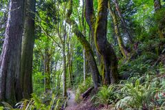 Tall mossy trees over a path Stock Photo