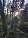 Sunshine through woodland, Aira Force, lake district Royalty Free Stock Image