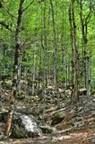 Trees and mossy rocks on the forest Royalty Free Stock Photos
