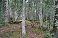 Trees and mossy rocks on the forest Stock Photos