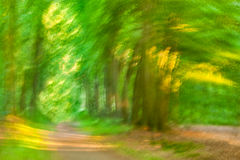 Trees Motion. Impressionist photo, intentional camera movement of a green forest at golden sunset royalty free stock photography